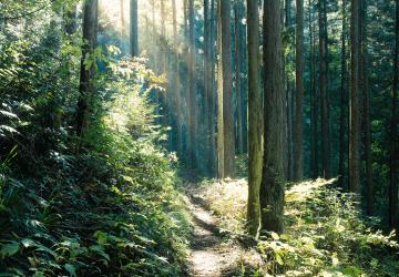 奥多摩総合開発 森林再生事業