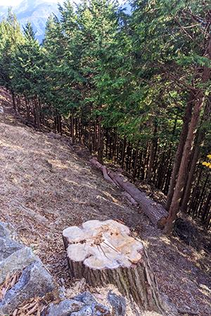 森林再生事業 奥多摩総合開発
